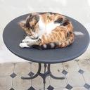 きまぐれ猫のDiary