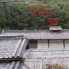先人の知恵『越屋根』形状は、実はかなり実用的です。