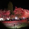 富士河口湖紅葉まつり その1 もみじ回廊 2018.11.11