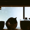 鍋、猫、鍋、鍋。