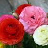 二人を見守る美しい花
