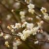 【珍道中】熱海、桜と梅の旅〜お次は梅!