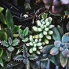 【書評】世界史を大きく動かした植物とは?