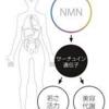 【NMN点滴でタイムマシーンを手に入れる?!】
