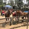 フィリピン、Baguioで乗馬体験!