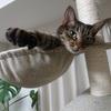我が家の猫あるあるシリーズパート2