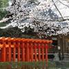 春日神社の桜