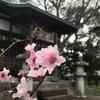 磐田市の天御子(あまみこ)神社にお参りしました。小さなお社ですが、由緒正しいお宮でした。