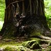 光が樹の神聖さをひきだす 福岡県宮若市緑山畑