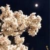 月見夜桜。