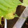 家で作る虫よけスプレー(植物用)