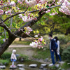 令和の桜 養和の流行病