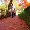 紅葉⑧朱に染まる