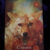 今日のカード The Coyote