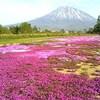 でっかいどう北海道、三島さん家の芝桜と羊蹄山と雨の支笏湖
