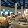 【国内最大のアンモナイト展示】三笠市立博物館で太古のロマンに触れる