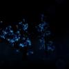 【オキュラスクエスト(Oculus Quest)】無料アプリ『NOTES ON BLINDNESS』レビュー。