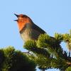 東京近郊で出会えるきれいな鳴き声の野鳥