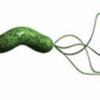 こどものピロリ菌について解説します