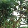 沖縄に行った際に道路で王様のフルーツで有名なドリアンみたいなものを見つけました。
