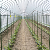 【農業体験】 トマトの苗作りの準備&畑を耕してきました!