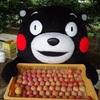 熊本玉東町 ハニーローザの収穫