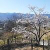 山梨百名山、大蔵経寺山を登る
