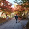 紅葉がきれいな近水園