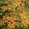 徐々に変わりゆく秋色
