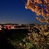 南足柄市 一の堰ハラネの春めき桜が見頃です