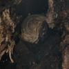浜松市で木の中に巣を作っていたスズメバチの巣を駆除してきました!