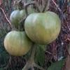 """畑からこんにちは! 1105  """" 寒さに負けず育つ野菜😆 """"  #家庭菜園"""