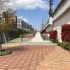 21/03/26 横浜・掃部山(かもんやま)公園の桜