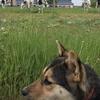 迷い犬ボーイ 近況報告3