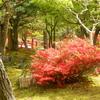 大根島・由志園の花と情景 3(島根県松江市)