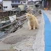【猫の島 青島へ再上陸!】猫だらけの幸せに浸った至福の1時間