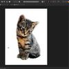 【Windows】Affinity Photoでふわふわした動物を切り抜いて背景を白にする方法