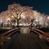 【撮影記】静岡県の桜の名所!今年も「三嶋大社」にて桜を撮影してきました!