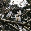 梅の花 春の雪に震えている