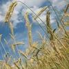 【副業で農業】農地の確保から販売まで、抑えておくべき知識まとめ