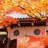晩秋の京都・奈良 ③永観堂