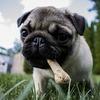 犬の皮膚病かさぶた写真と治療体験!細菌培養検査へ