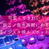 可愛くてきれい!新江ノ島水族館にある超インスタ映えスポットをご紹介します!