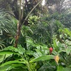 Vol.92  SG #8 「Singapore Botanic Garden」