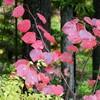紅葉の後に咲く花