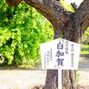 名古屋市長の梅見つけた@荒子公園