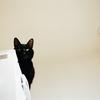 うちの猫は夜になると冷蔵庫に飛び乗る
