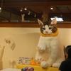 大きな仔猫