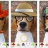 犬撮りアプリがおもしろ可愛い!!