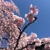 今日は最高の奈良日和